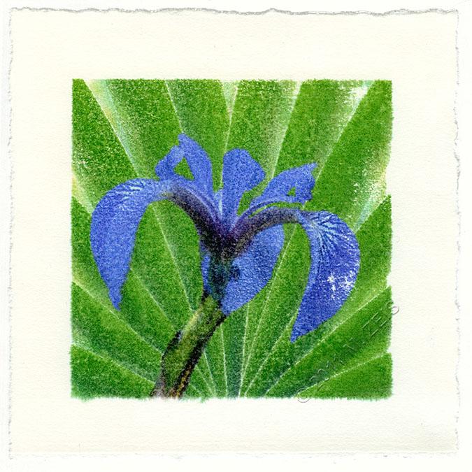 deco iris130 w c