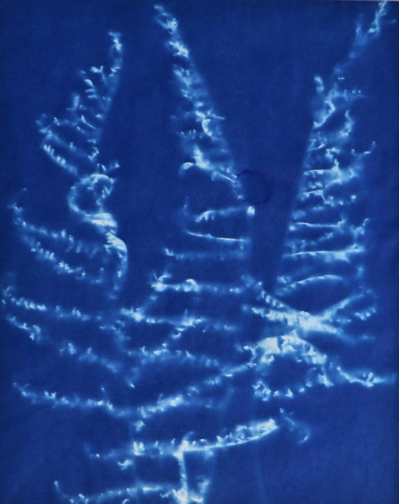 Lisa Shea - Three Ferns Cyanotype