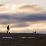 John Randell - Walking The Dog