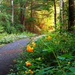 Hopedale Parkland - Judy Belben